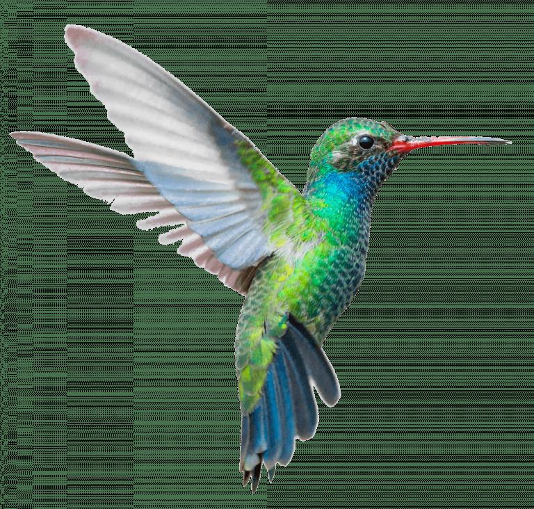 Fresh Forward Kolibrie 1
